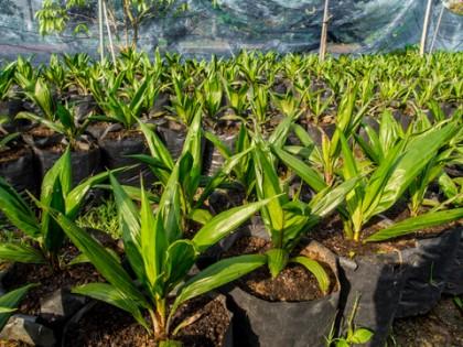 Palma a sustentabilidade